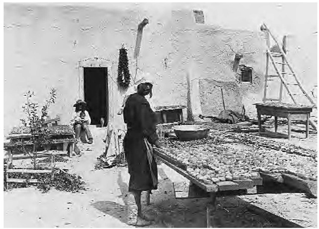 An Isleta woman dries peaches (1889). The Spanish introduced new crops such as peaches, wheat, and peppers into the region in the early seventeenth century.