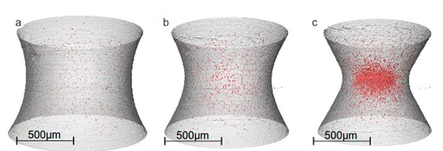 3-D views of a notched strained specimen at various steps of deformation: