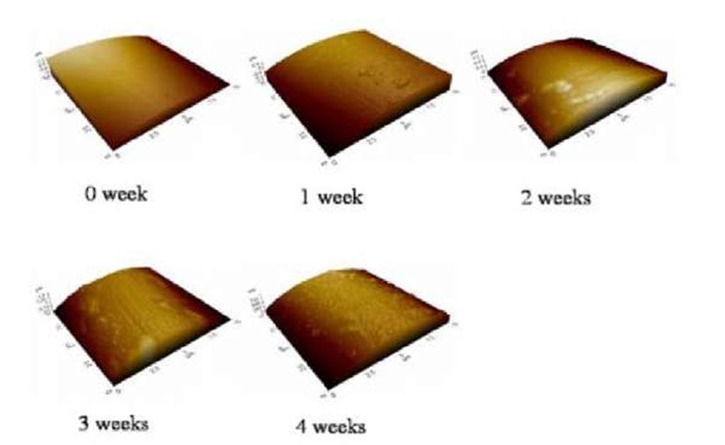 Topography images of the sutures at different degradation times