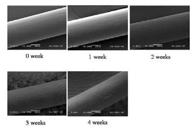 SEM results of polyglactin 910 sutures at different degradation days
