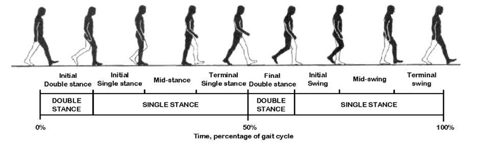 Gait Cycle Foot – images free download