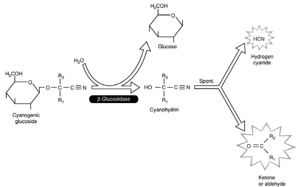 Biochemistry and Molecular Biology of Digestion (Insect Molecular