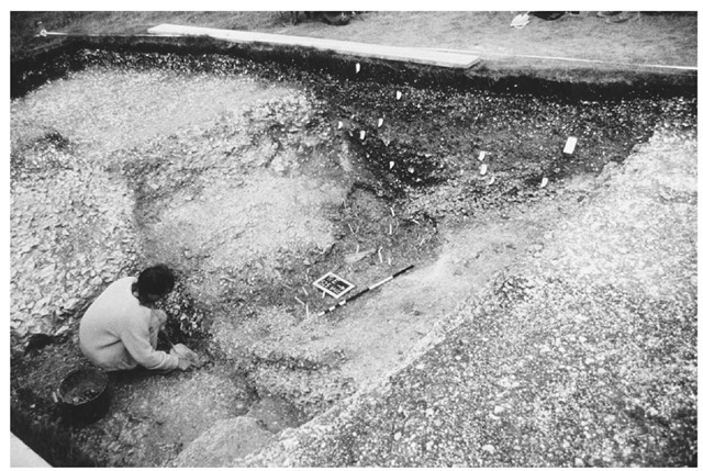 Excavation in 1988 of the middle ditch (Trench E) on the north side of the Windmill Hill enclosure, southern England. Abundant but small bone deposits were contained in a complex stratigraphy, close to the terminal of the ditch segment in question.