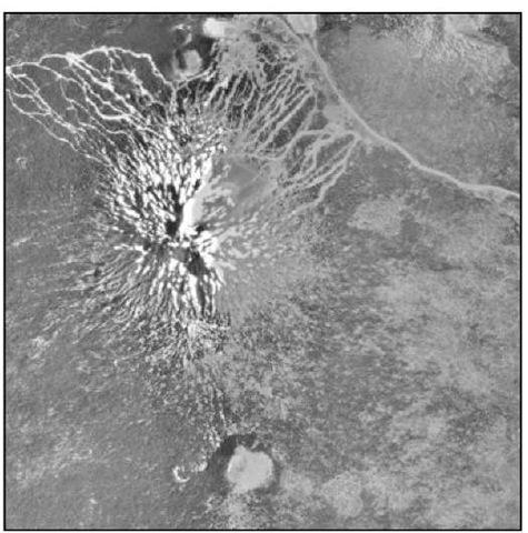 A Digital Orthophoto Quadrangle map.