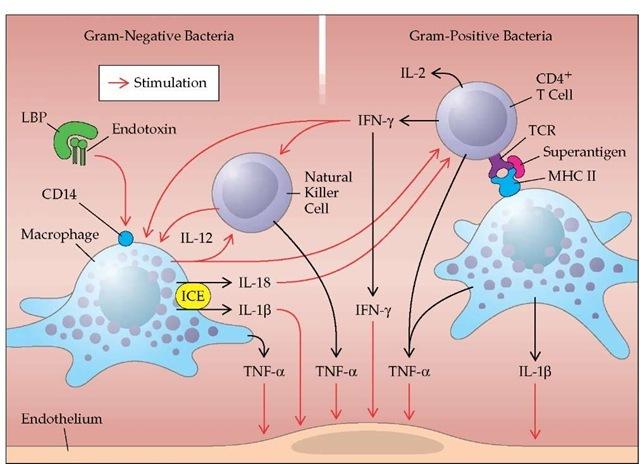 sepsis definition neu