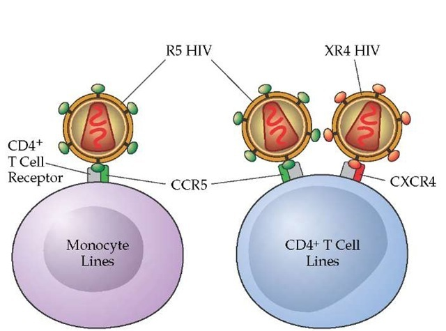 what is the relationship between hiv and a helper cell