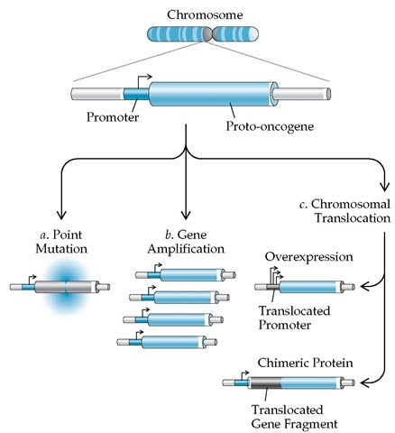 molecular genetics of cancer The search for genetic damage in neoplastic cells now occupies a central place in cancer research diverse examples of such damage are in hand, and they in turn hint at biochemical explanations for neoplastic growth the way may be open to solve the riddles of how normal cells govern their .