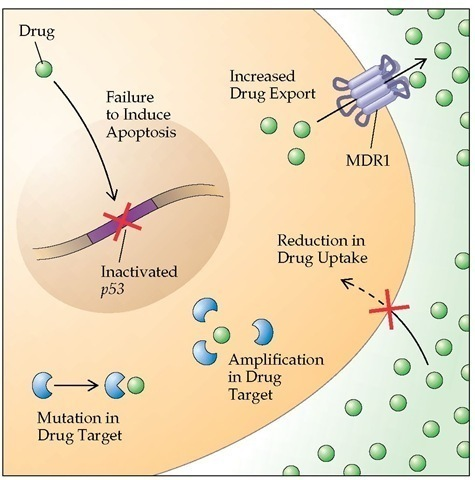 drug resistance mechanisms in cancer cells Antibody-drug conjugates (adcs) are a means to deliver cytotoxic drugs specifically to cancer cells the delivery is followed by internalization of the adc and release of free, highly active cytotoxic agents within cancer cells, leading eventually to cell death.