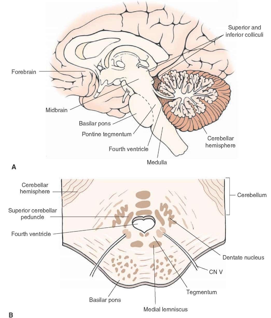 Brainstem II: Pons and Cerebellum Part 1