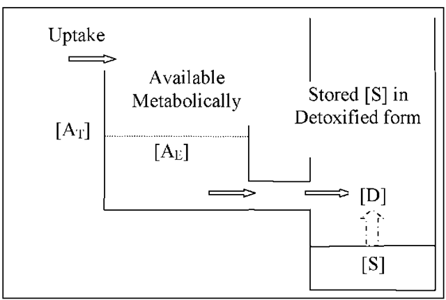 Cadmium accumulation pattern of aquatic organisms from waterborne sources showing net accumulation of cadmium without excretion of any cadmium taken up (modified from Rainbow, (2002)), [AE]—excess cadmium over and above metabolic requirement, [AT]—threshold concentration of metabolically available cadmium, above which the accumulated cadmium is toxic, [D]—metabolically available cadmium in excess of requirements is detoxified, [S]—the detoxified component of accumulated cadmium with no upper concentration limit.