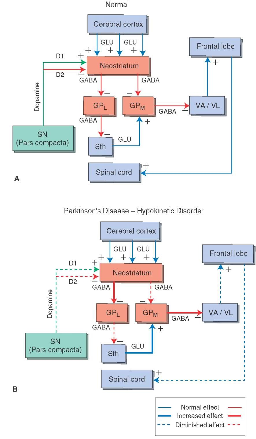 The Basal Ganglia Motor Systems Part 2