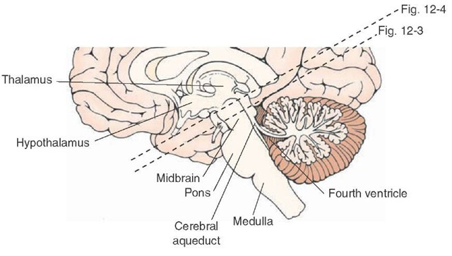 Midsagittal section of the brainstem depicting the midbrain and the levels at which the cross-sectional diagrams were taken, as indicated in Figures 12-3 and 12-4.
