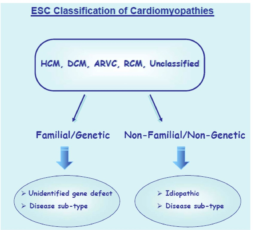 The European Society of Cardiology classification of cardiomyopathies.