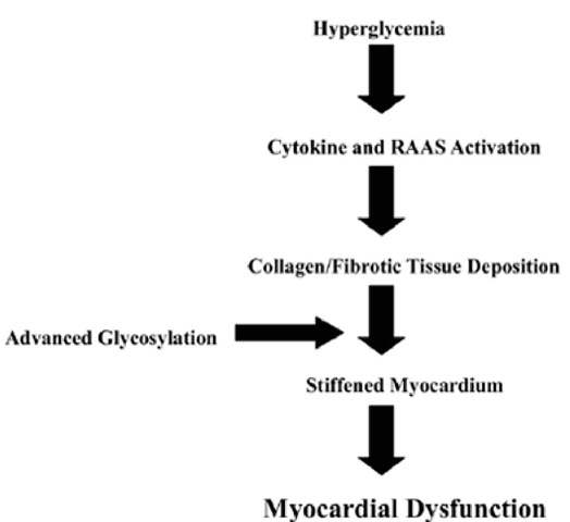 EFFECTS OF HYPERGLICEMIA ON THE DIABETIC CARDIOMYOPATHY. RAAS: renin-angiotensin-aldosterone system.