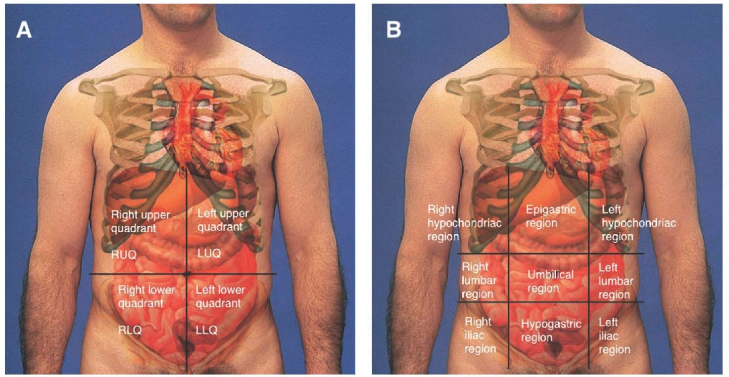 Physical examination and secondary assessment principles of abdominal territories a quadrants b nines ccuart Image collections