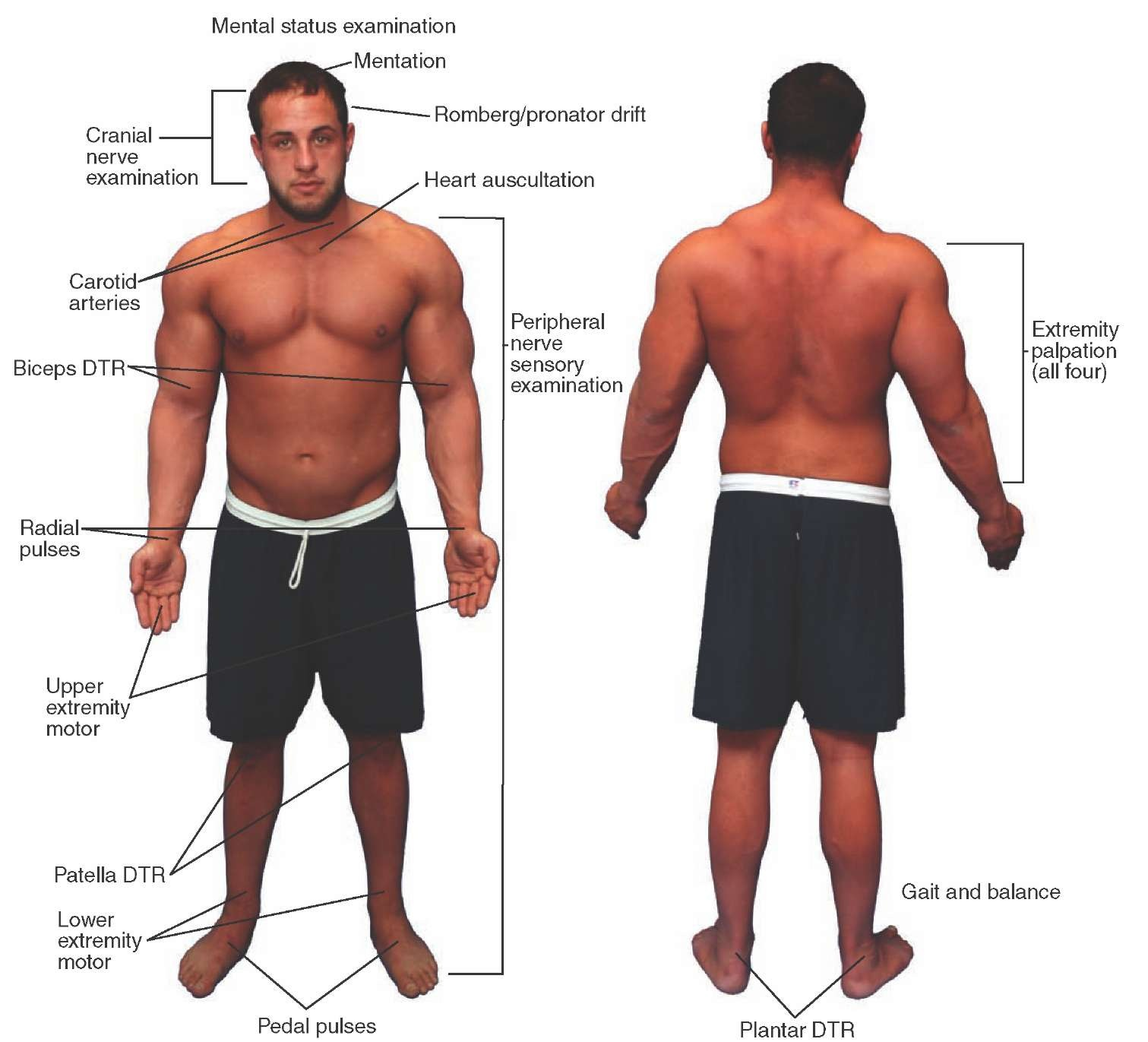 Male Physical Examination
