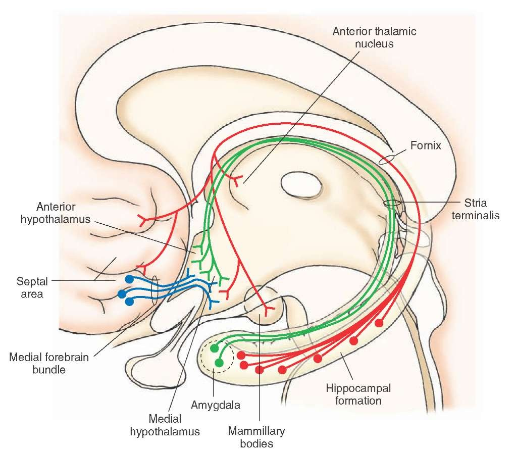 The Hypothalamus (Integrative Systems) Part 1