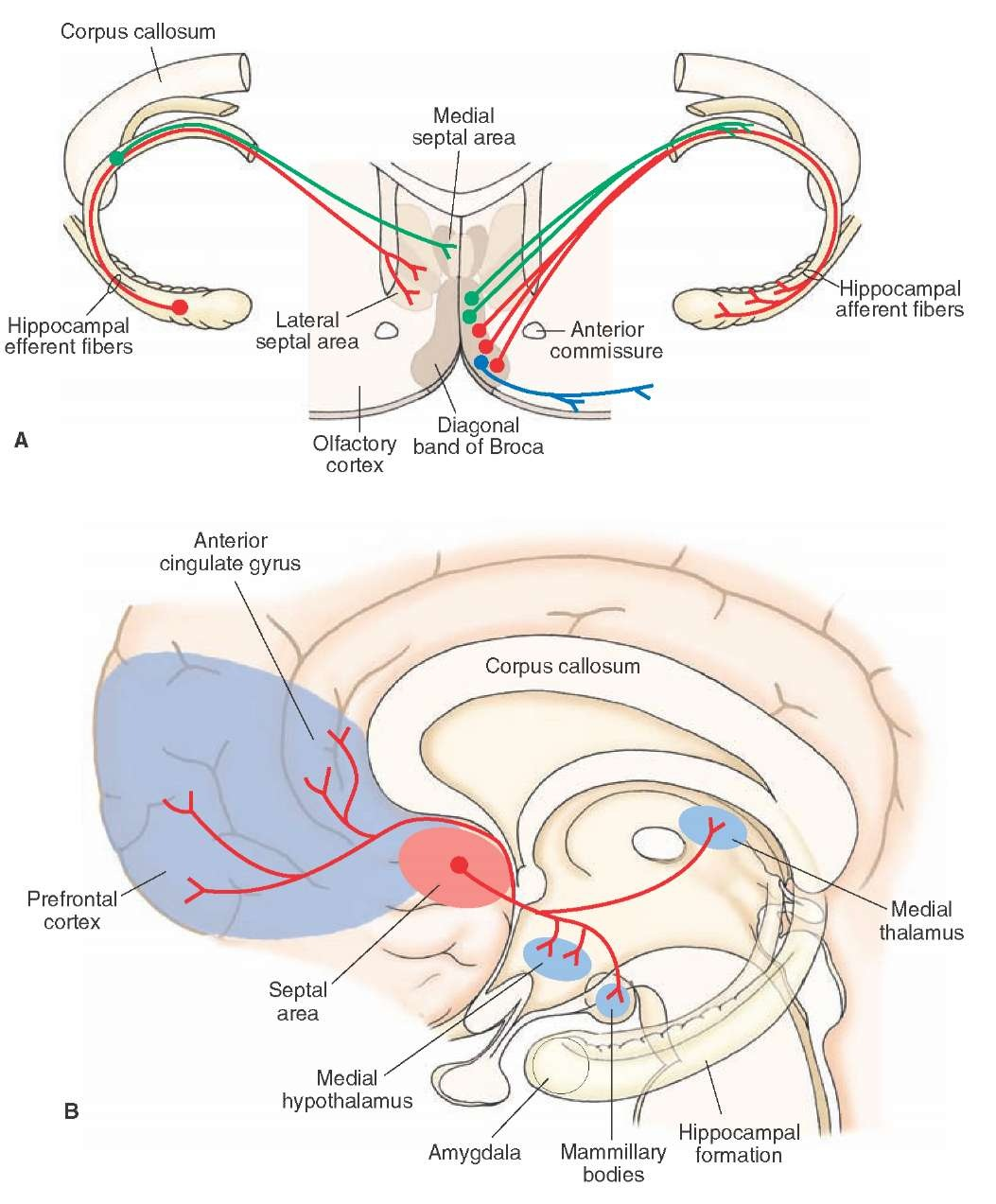 The Limbic System (Integrative Systems) Part 2