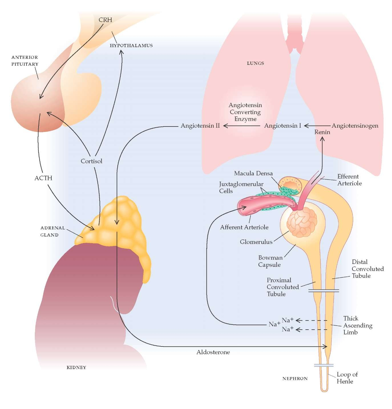 steroid treatment adrenal insufficiency