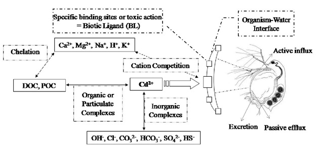 Conceptual diagram of cadmium speciation and cadmium-binding sites based on the biotic ligand model (BLM) showing inorganic and organic complexation in the water and interaction of metals and cations on the biotic ligand, adaptation to the zooplankton. (after Di Toro et al., 2001). POC=particulate organic carbon; DOC=dissolved organic carbon; CO32- =carbonate; HCO3-=bicarbonate; OH-=hydroxide; Cl-=chloride; SO42-=sulfate; HS-=sulfide.