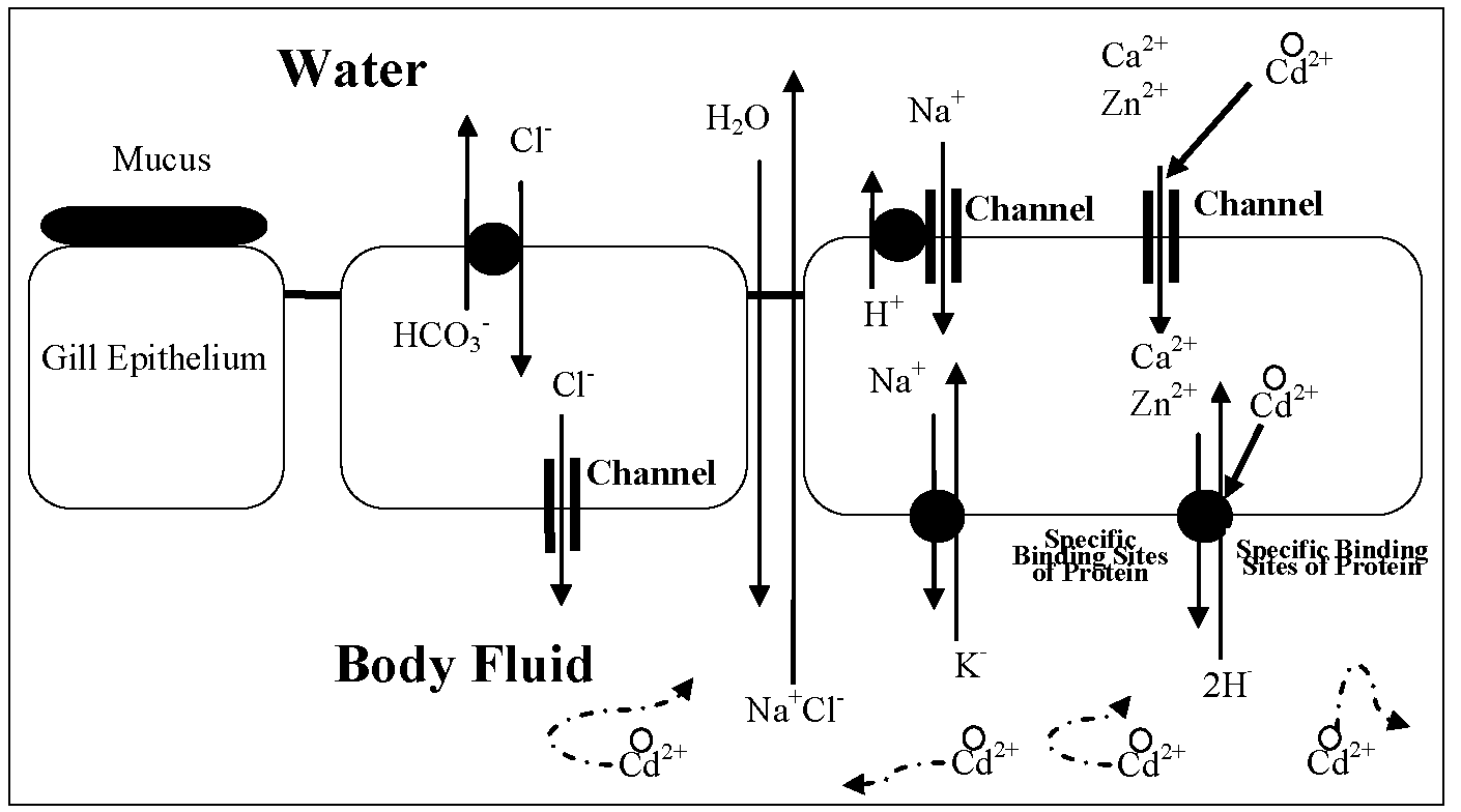 sources and pathways of cadmium in the environment part 2
