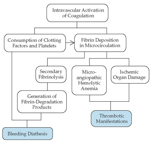 In compensated disseminated intravascular coagulation (DIC), such as that which occurs in Trousseau syndrome, thrombotic manifestations predominate in the clinical presentation. In decompensated DIC, however, fibrin-fibrinogen degradation products exacerbate the consumption coagulopathy and play a significant role in the bleeding diathesis.
