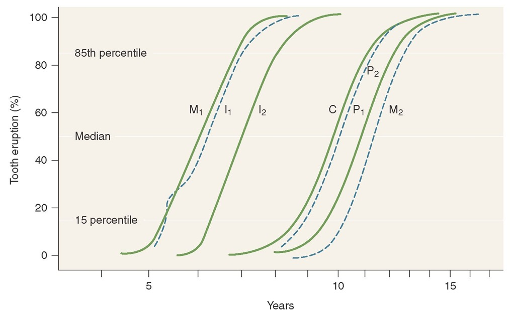 Age of attainment of growth stage using a cumulative distribution function in which data represent tooth emergence.First molar; central incisor;lateral incisor;canine;first premolar;second premolar;second molar.