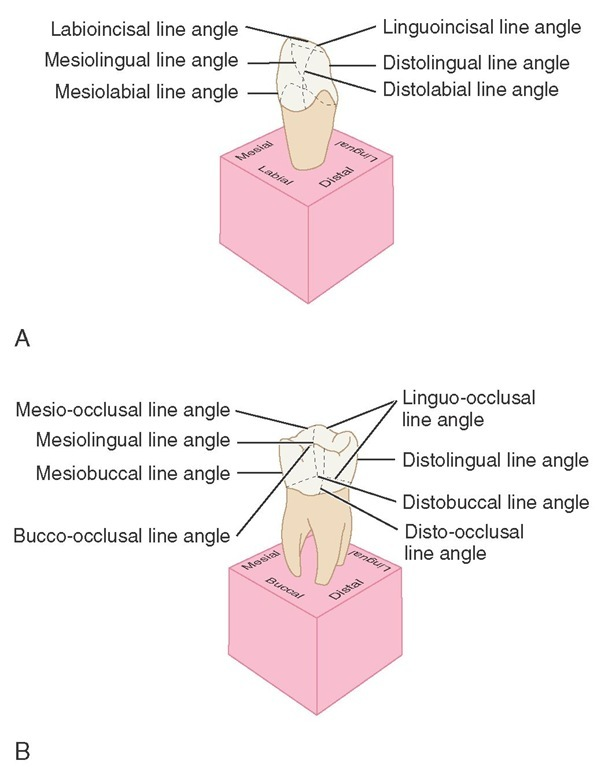 Line angles. A, Anterior teeth. B, Posterior teeth.