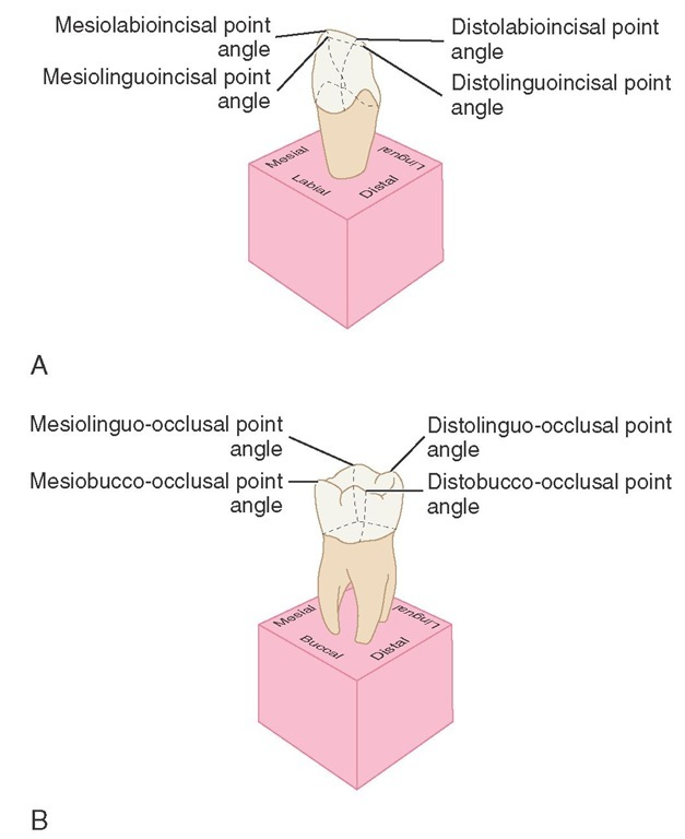 A, Point angles on anterior teeth. B, Point angles on posterior teeth.