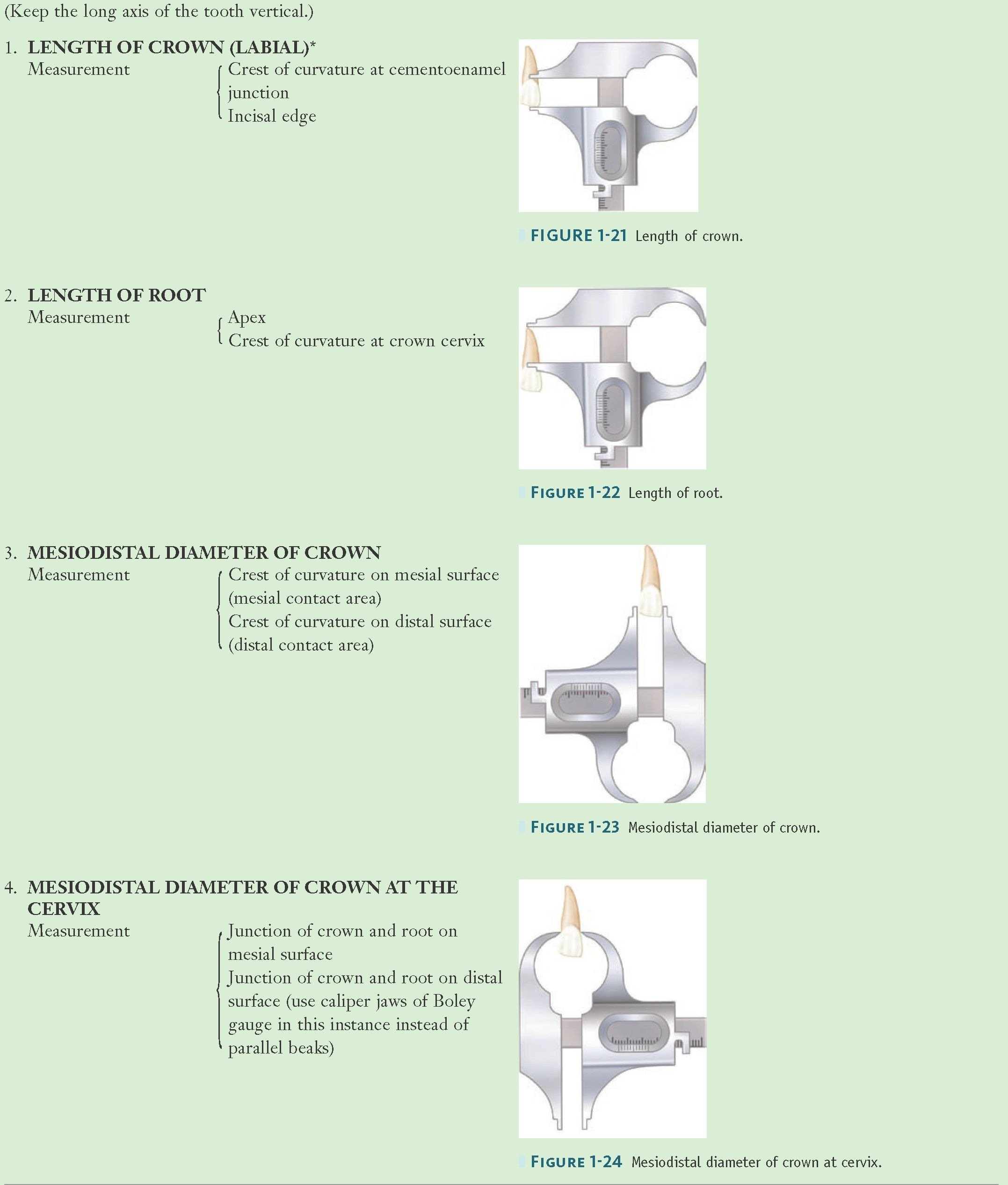 Method of Measuring an Anterior Tooth—cont'd