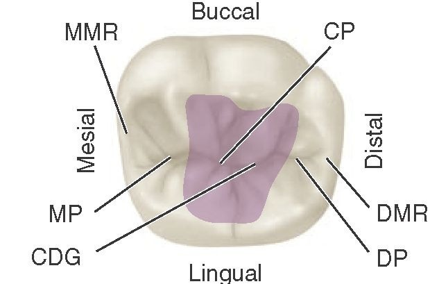 Occlusion (Dental Anatomy, Physiology and Occlusion) Part 4