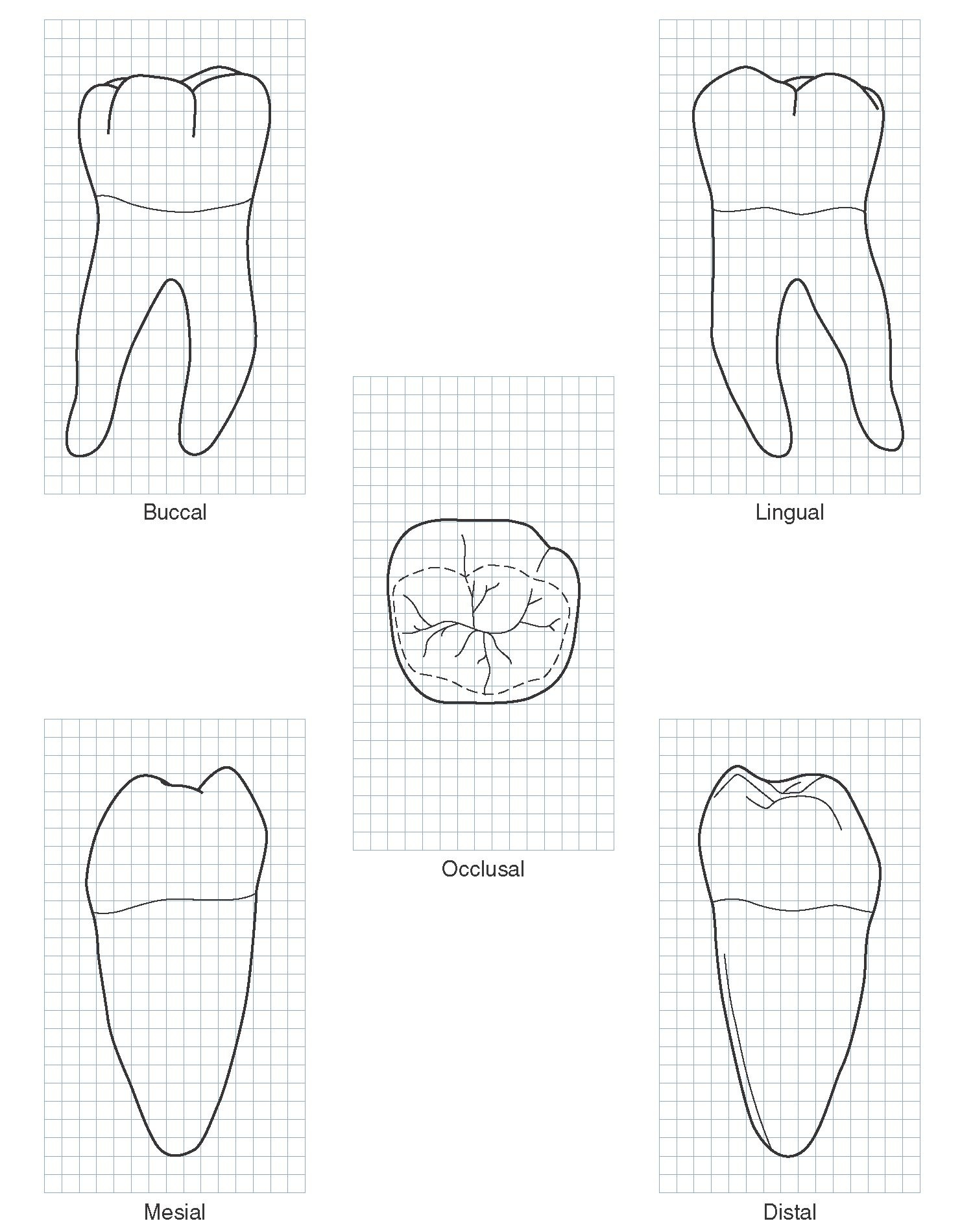 The Permanent Mandibular Molars (Dental Anatomy, Physiology and ...