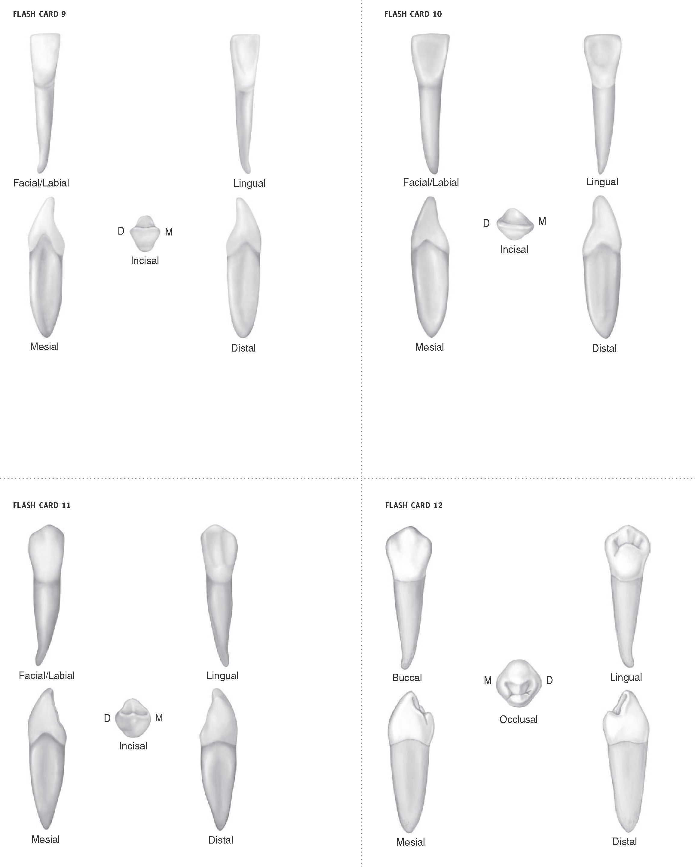 Wheelers dental anatomy physiology and occlusion download. Arkabuz ...