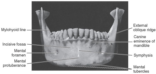 Frontal view of mandible.