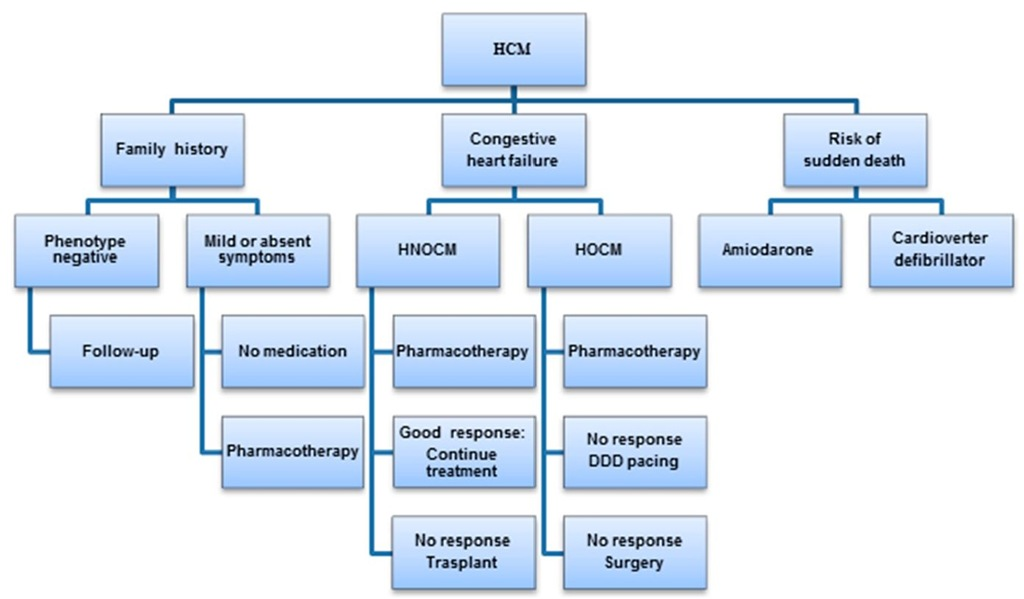 Algorithm for the treatment of hypertrophic cardiomyopathy