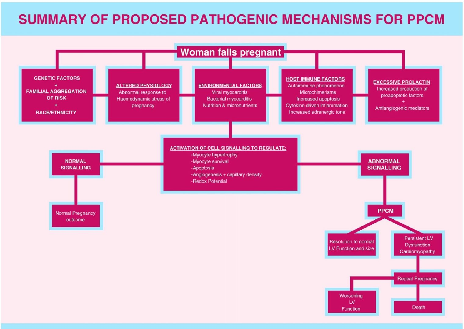 Summary of proposed pathogenic mechanisms for PPCM.