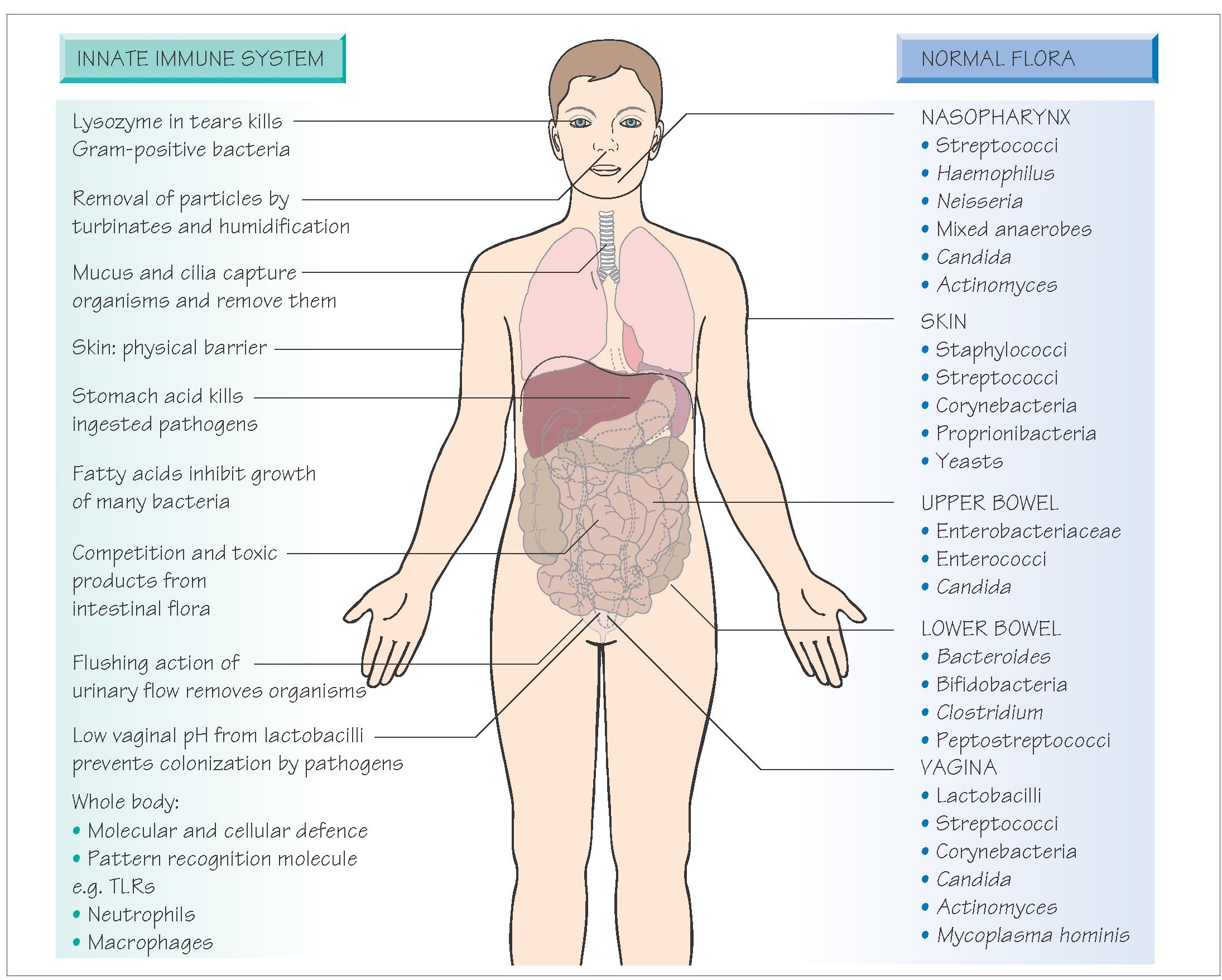 Natural Barriers Of The Body