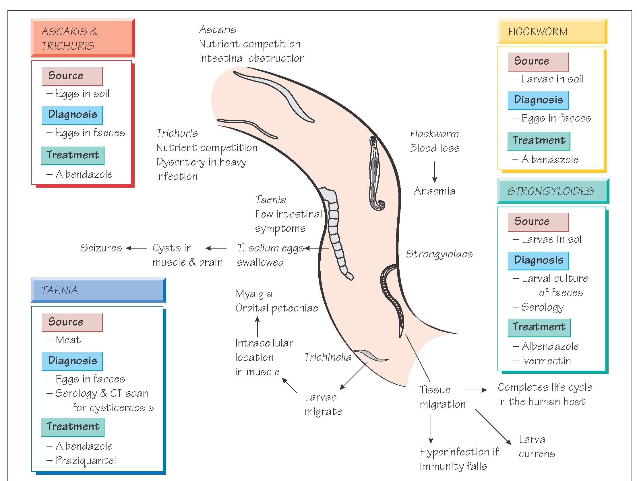 Simptome și simptome de helmintiază