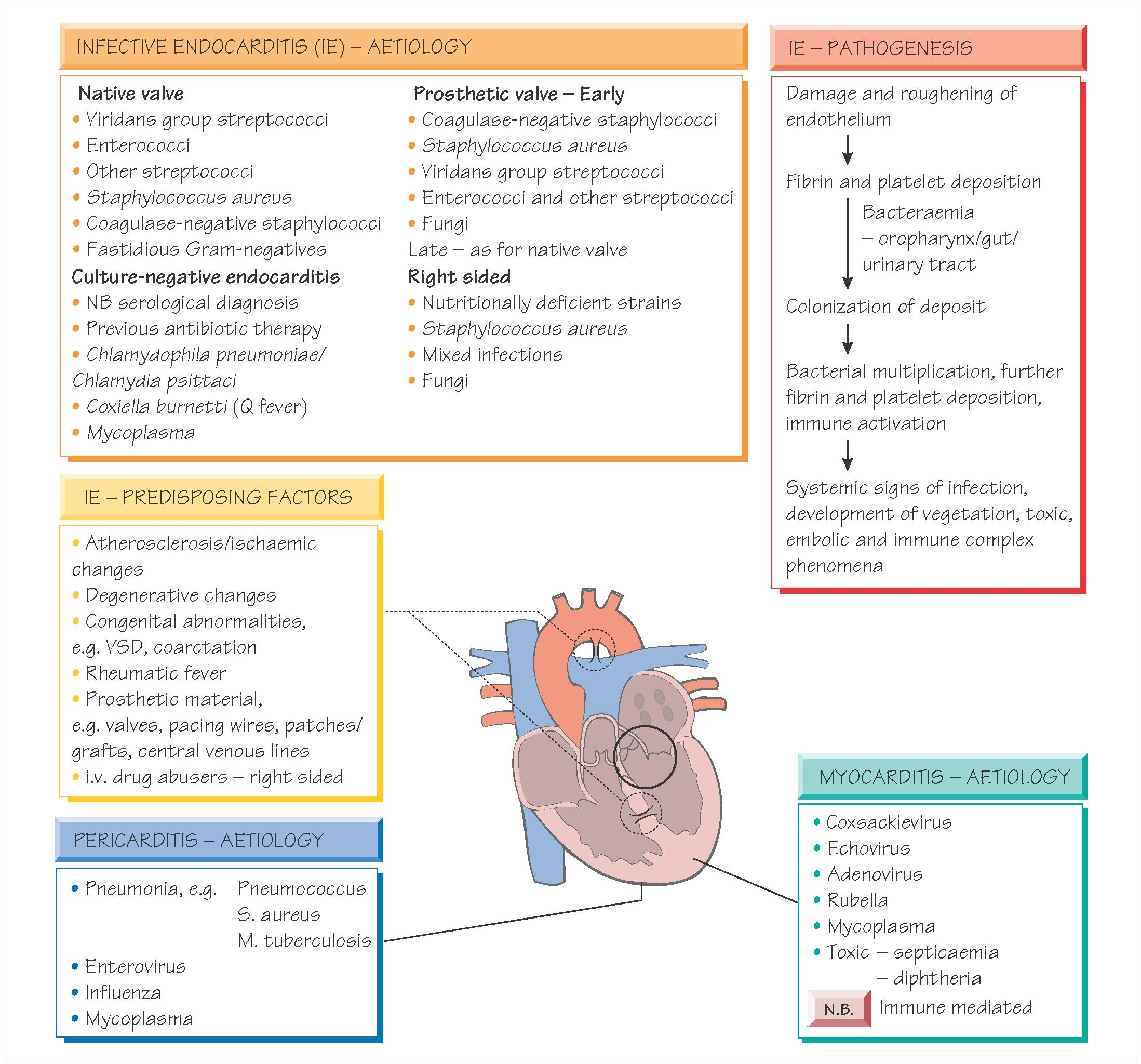 Endocarditis, myocarditis and pericarditis (Systemic ...