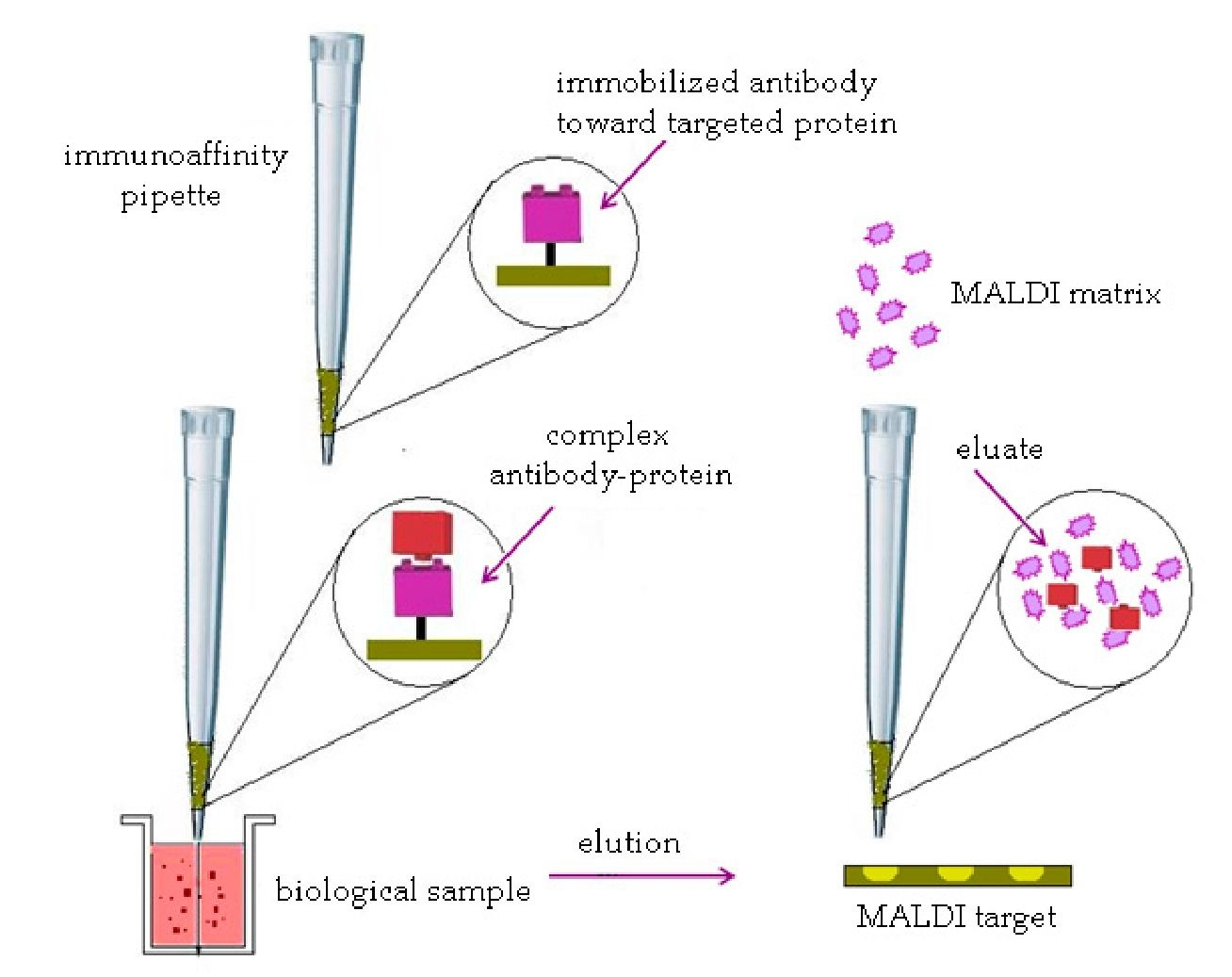 Developing Novel Methods for Protein Analysis and Their Potential ...