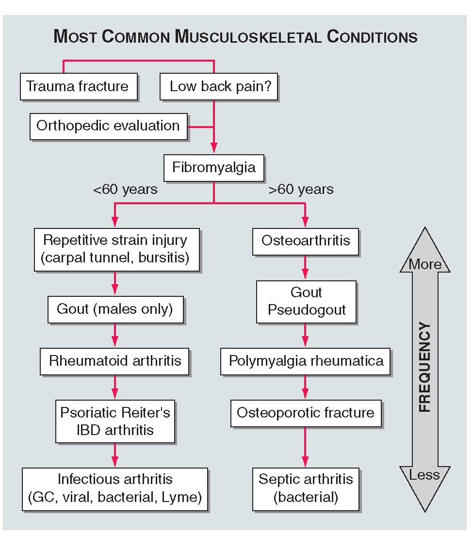Signs of abnormalities of the musculoskeletal system