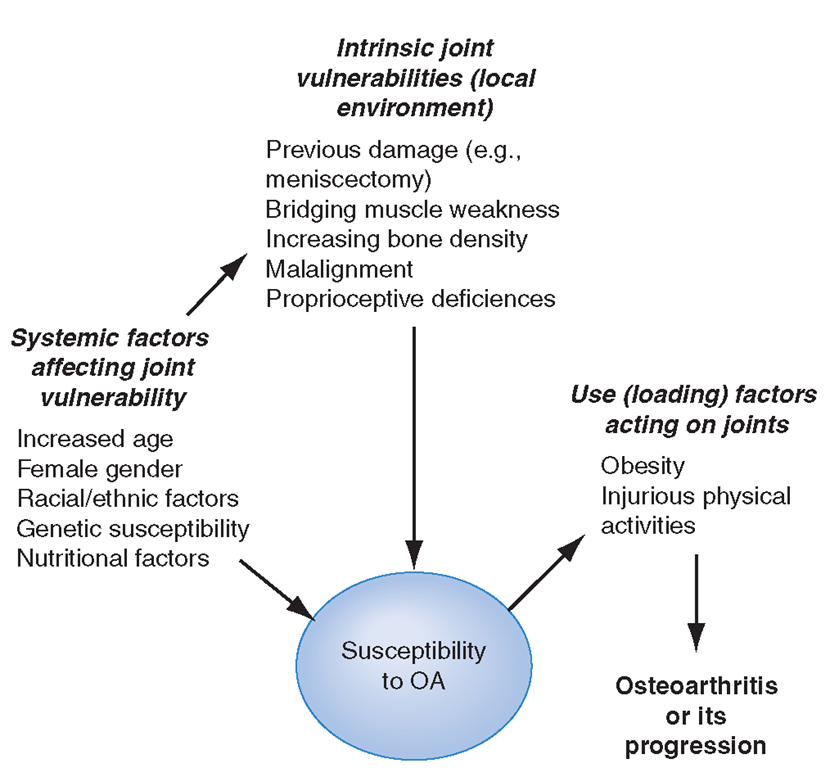 Risk factors for osteoarthritis either contribute to the susceptibility of the joint (systemic factors or factors in the local joint environment) or they increase risk by the load they put on the joint. Usually a combination of loading and susceptibility factors is required to cause disease or its progression.