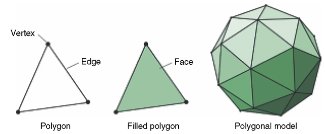 Polygons Are Composed of Vertices and Edges. Filled Polygons Interact with Virtual Light, and When Many Polygons Share Vertices and Edges, a Polygonal Model Is Constructed.