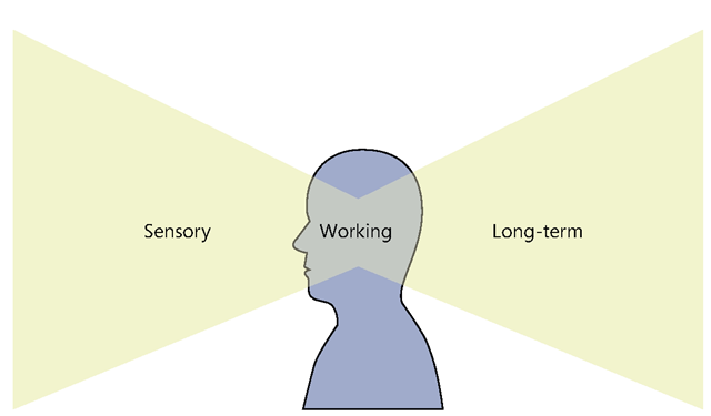 The three types of human memory: sensory memory, long-term memory, and working memory.