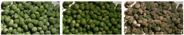 Three stages of water-based peas in a time-lapse sequence.