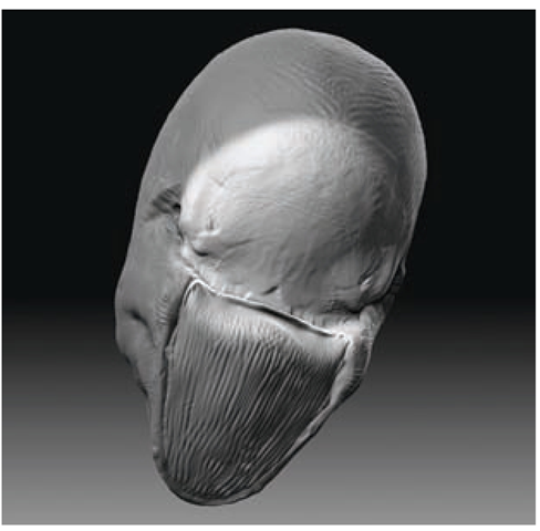 Sculpting the Skull (Sculpting in ZBrush) (ZBrush Character