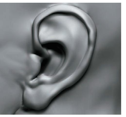 The ear in progress