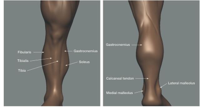 The Lower Limb (Sculpting a Figure) (Digital Sculpting with Mudbox)