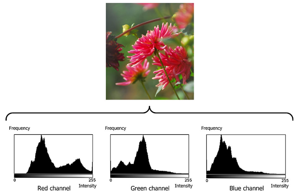 The histograms of a color image
