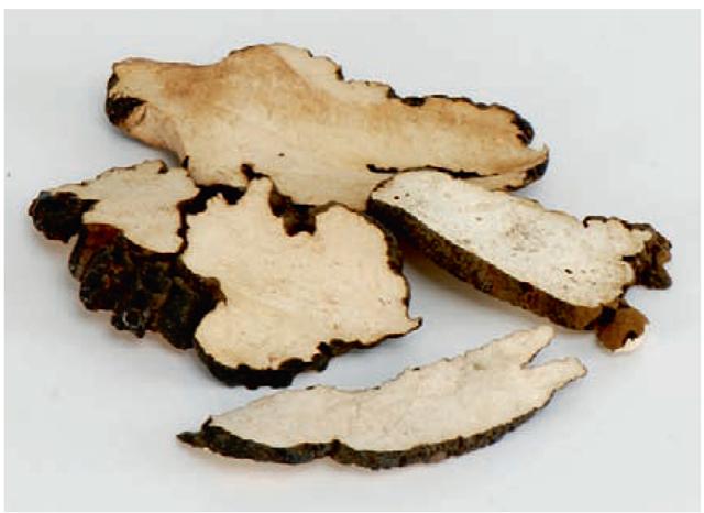 Zhuling (Polyporus umbellatus)